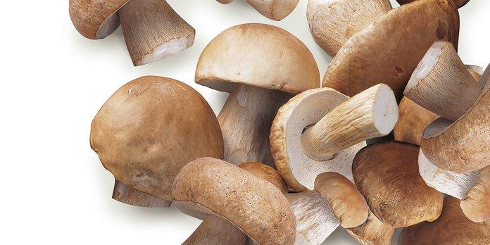 Как вырастить белый гриб