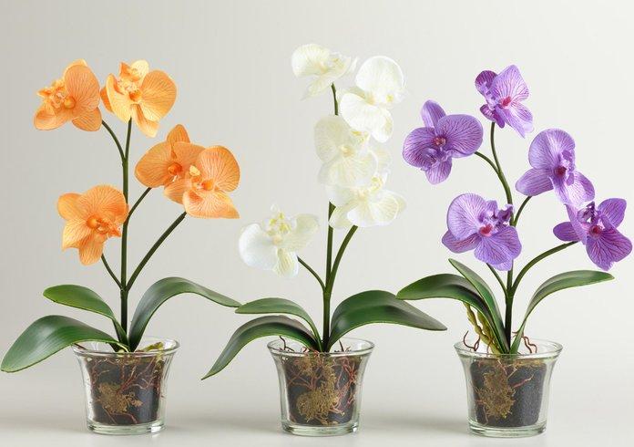 Способы выращивания орхидеи
