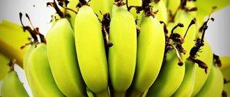 Как вырастить банан в домашних условиях?