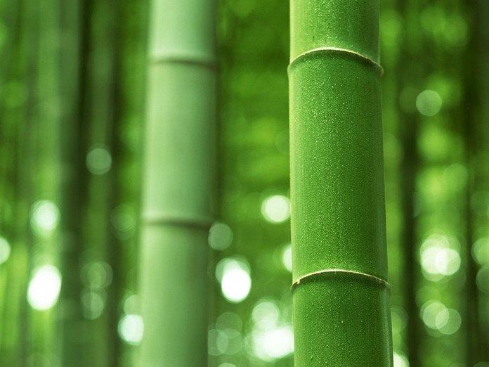 Сорта бамбука