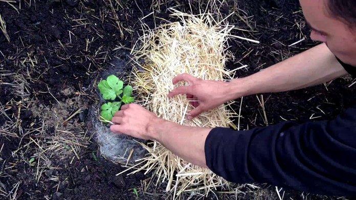 Подготовка почвы для арбуза