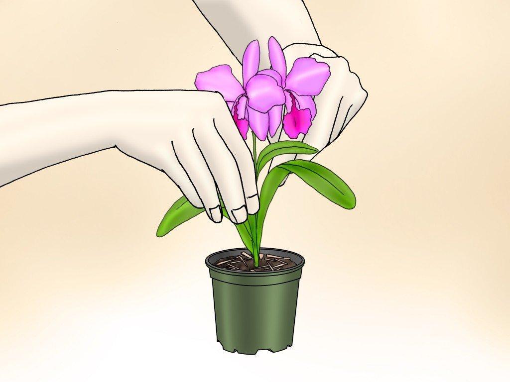 Уход за орхидеей в домашних условиях 8