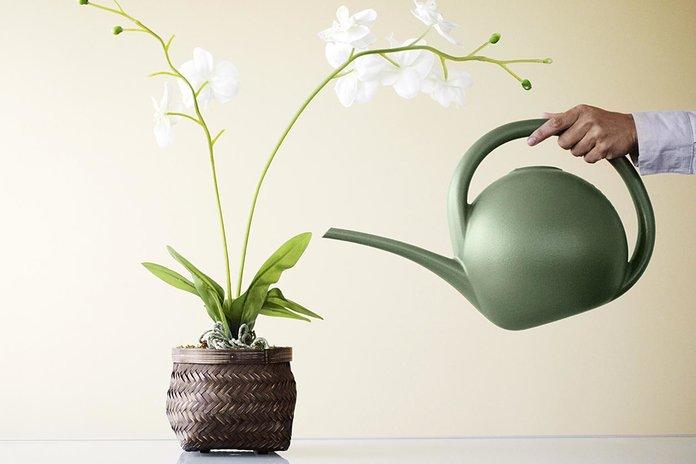 Полив и удобрение орхидеи