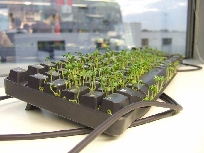 Выращиваем салат дома: условия посадки и уход