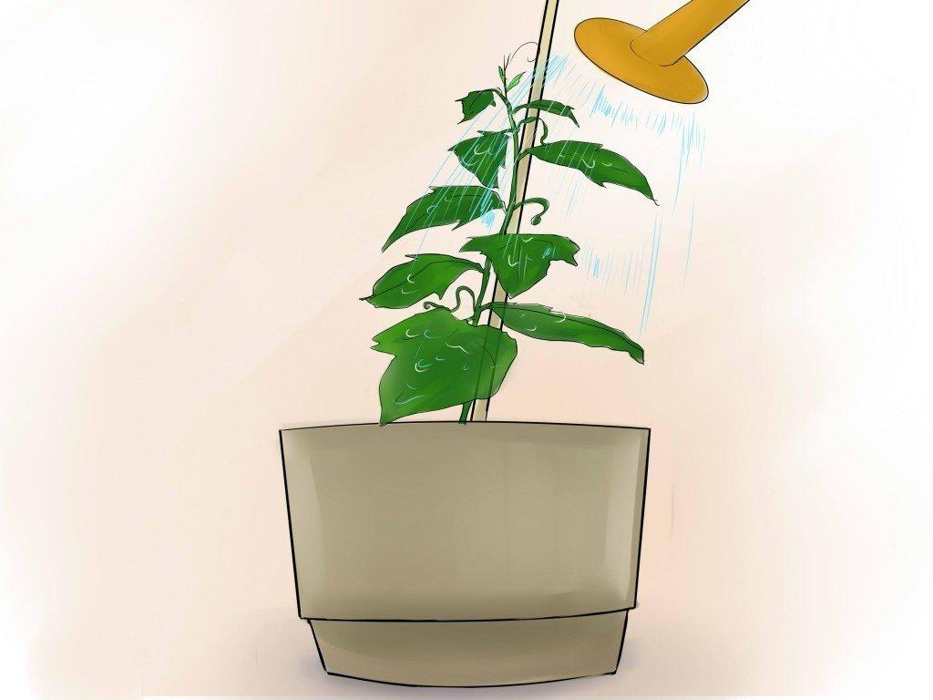 Как вырастить огурцы на окне в домашних условиях?