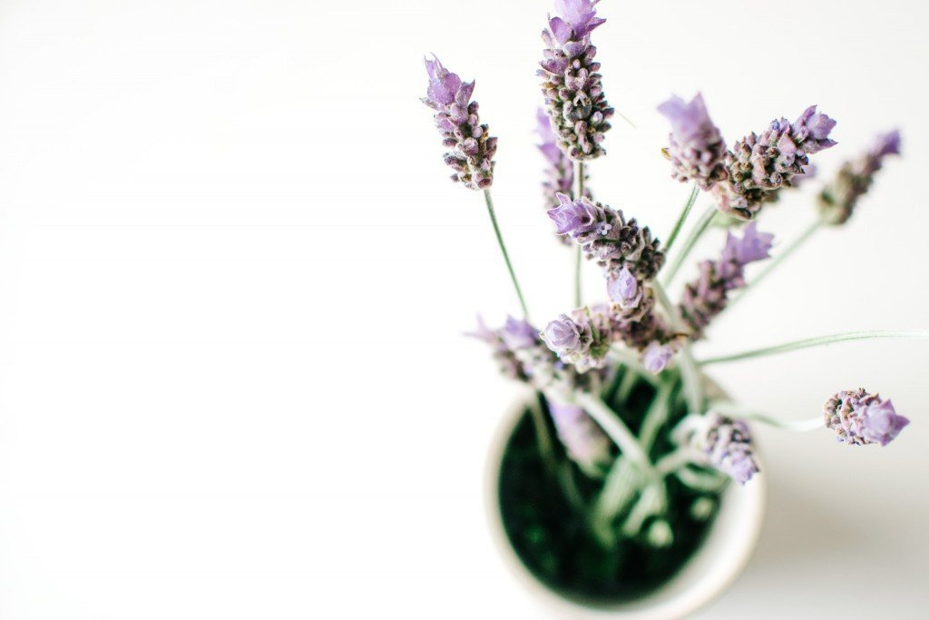 Как вырастить лаванду из семян в домашних условиях на рассаду