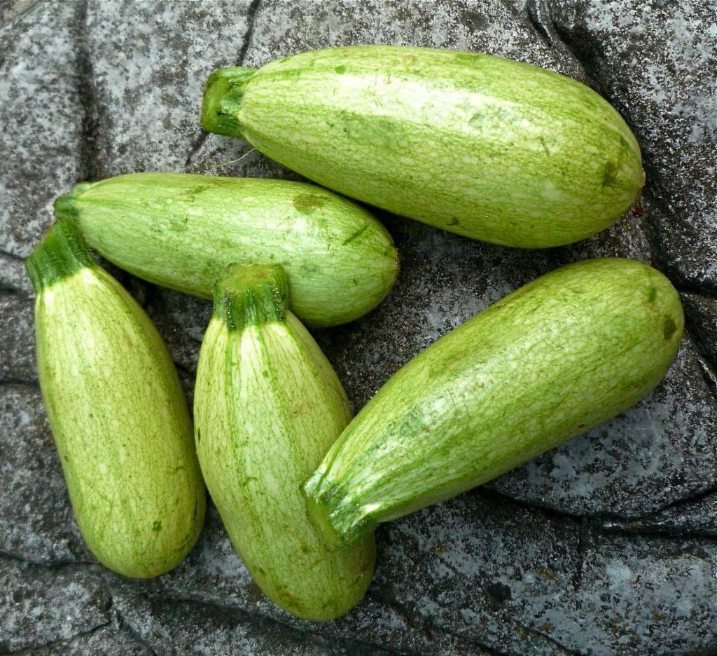 Как вырастить кабачки?