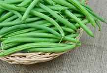 Как вырастить фасоль на даче?