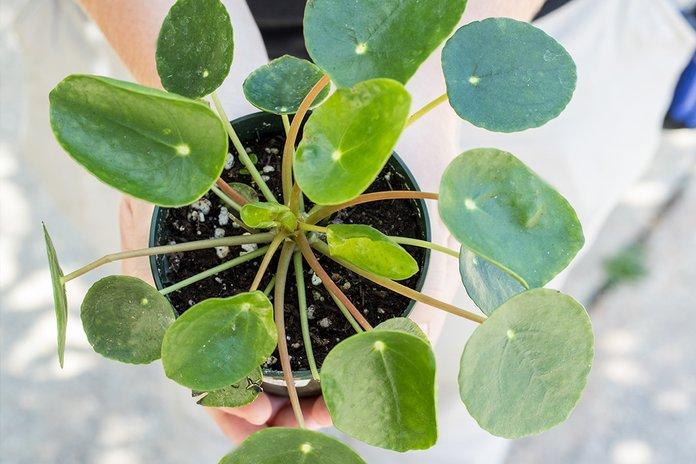 вид сверху растения