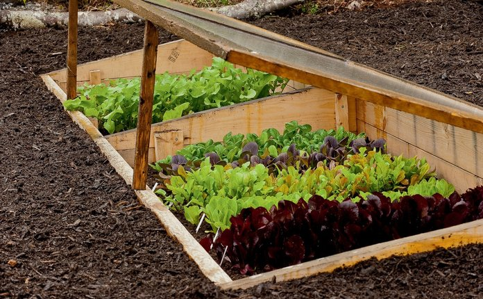 Обработка почвы для салата