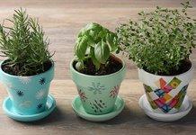 Как вырастить цветы из семян дома