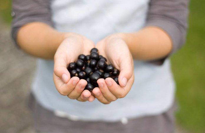 Состав и калорийность черной смородины