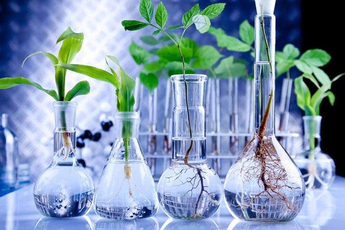 Растения в химической лаборатории