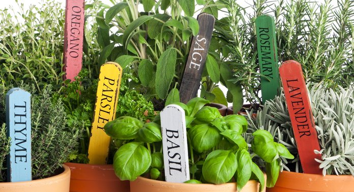 Выращивание трав в домашних условиях