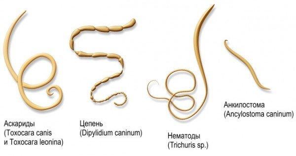 Разновидности паразитов и их названия