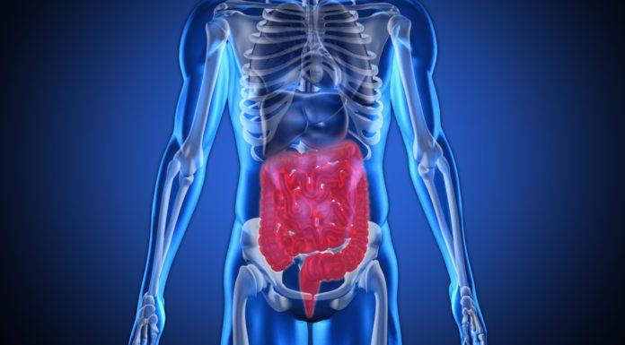 Рентген - пищеварительная система