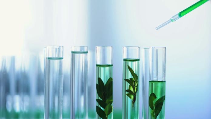 Травы в химических склянках