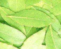 лавровый лист полезные свойства