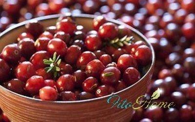 ягода клюква полезные свойства