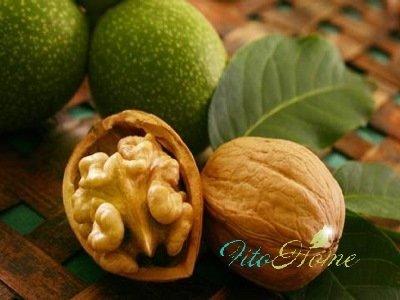 плоды грецкого ореха и их состав