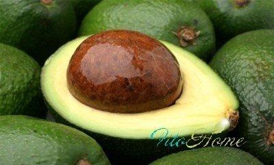 косточка и листья авокадо опасны