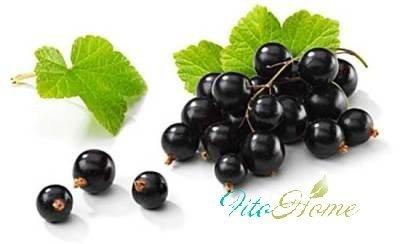 листья и ягоды черной смородины