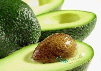 авокадо - выращивание дома