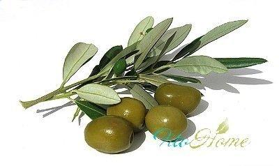косметология и плоды оливы
