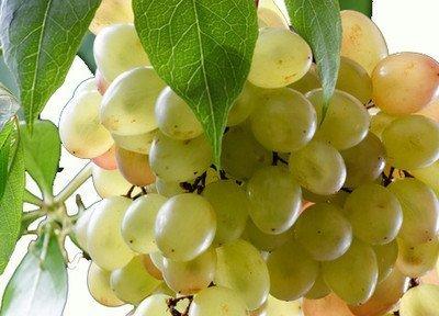 виноград имеет обширное применение