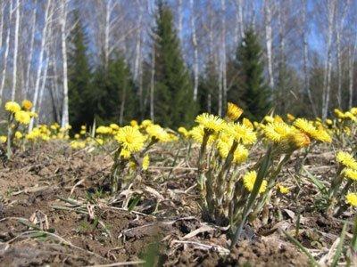 ждите эти цветы ближе к весне