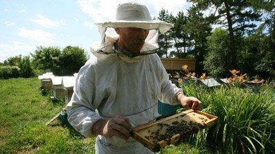 пчеловоды более стойкие к болезням