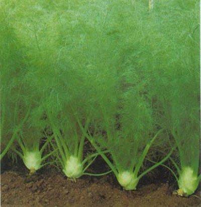 очень хорошее растение