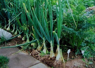 огород и овощи