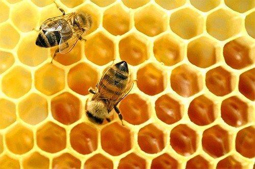 пчелиный воск для лечения ревматизма