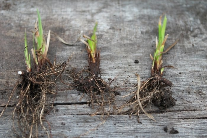 травы для улучшения потенции Бирюч