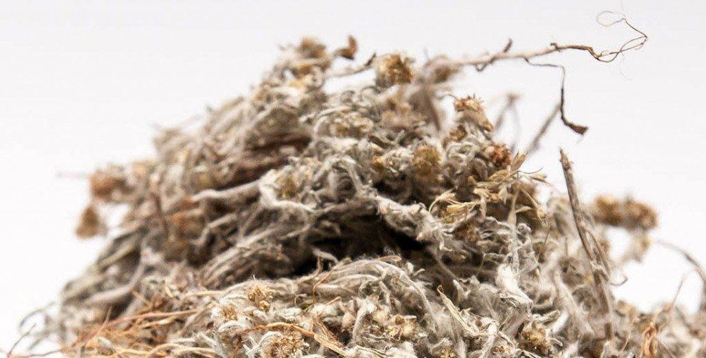 Лечебные свойства травы сушеницы топяной