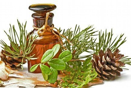 pine-needles-cones-oil