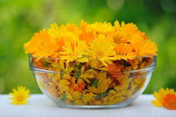 Цветы календулы лечебные