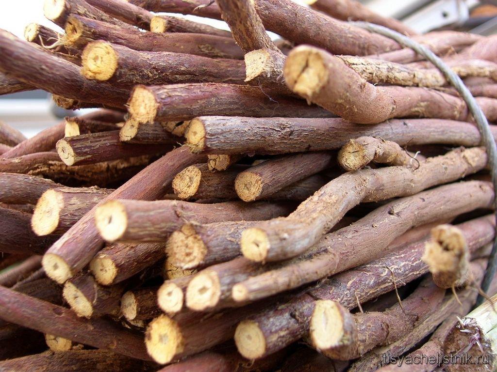 корень солодки от холестерина