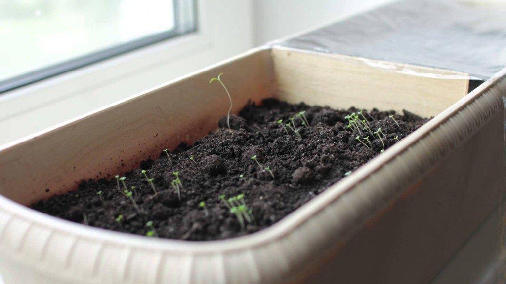 инструкция травы чабрец