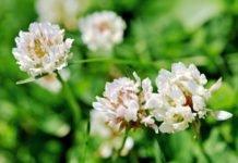 аллергия на багульник симптомы